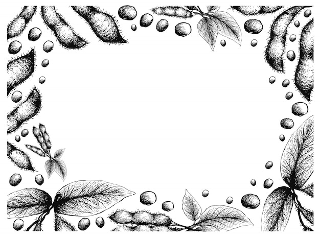 Hand drawn frame of delicious fresh soybeans