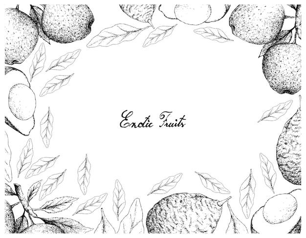アボカドとアップルフルーツの手描きのフレーム