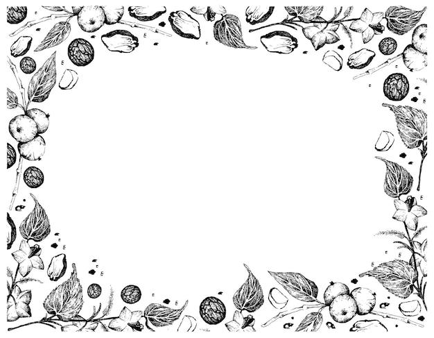 Рука нарисованные кадр из черных грецких орехов с арахисом саша
