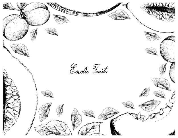 Casaba 멜론과 유럽 매실 과일의 손으로 그린 프레임