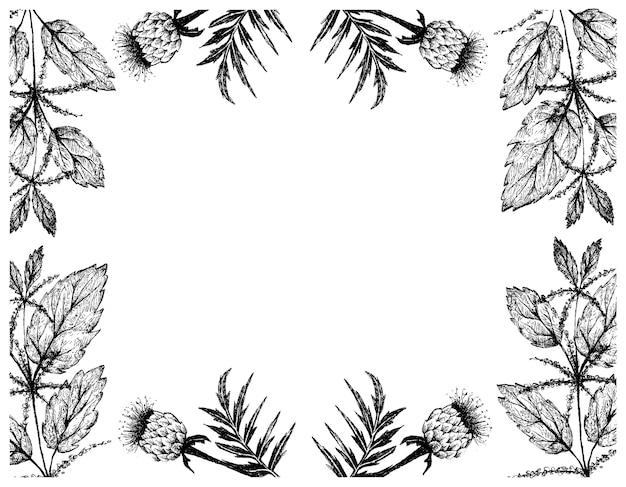 Рука нарисованные кадр корня марала и крапивы двудомной