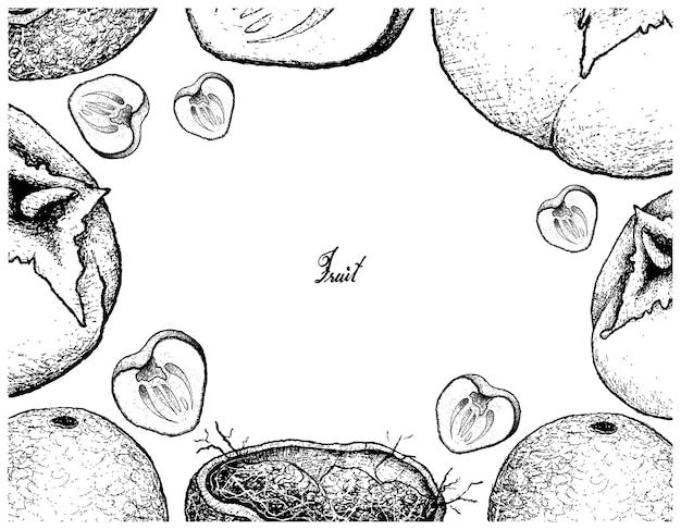 나무 사과 감의 손으로 그린 프레임
