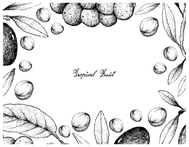 Hand drawn frame of olive and langsat fruits