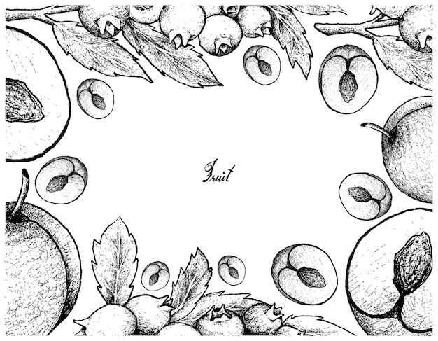 Hand drawn frame of plum and blueberry