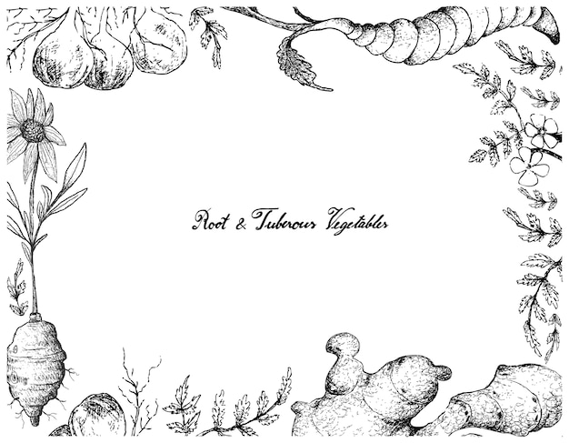 Hand drawn frame of root and tuberous vegetables