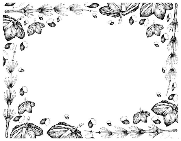 Hand drawn frame of sacha peanuts with equisetum plants
