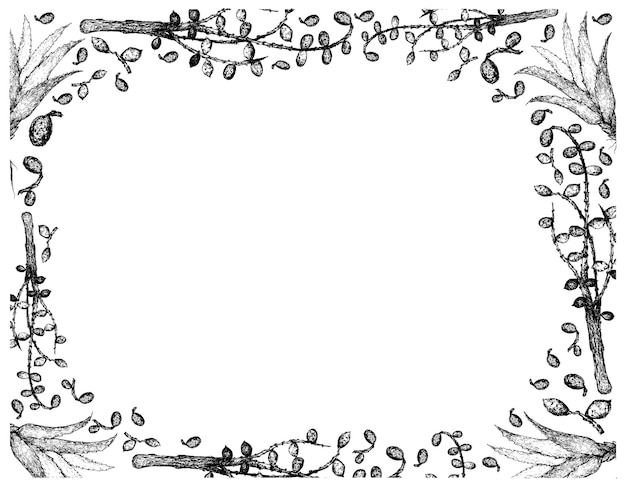 Hand drawn frame of saw palmetto berries with aloe vera
