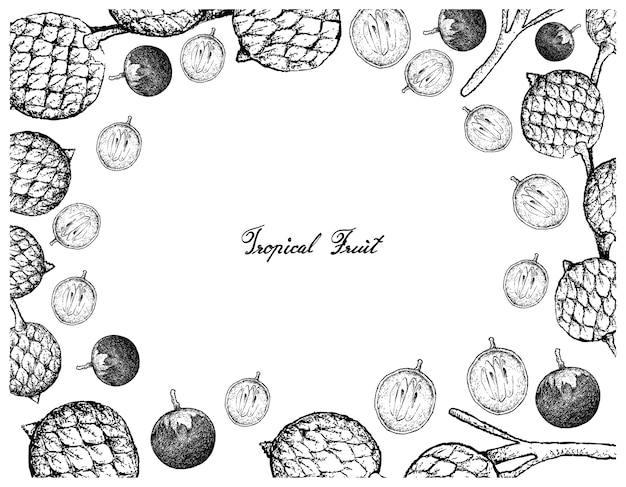Hand drawn frame of star apple and rattan fruits