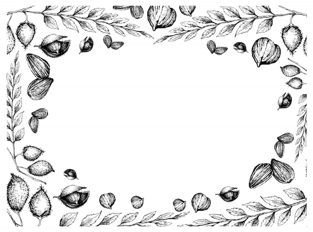 Hand drawn frame of sunflower seeds and chick peas