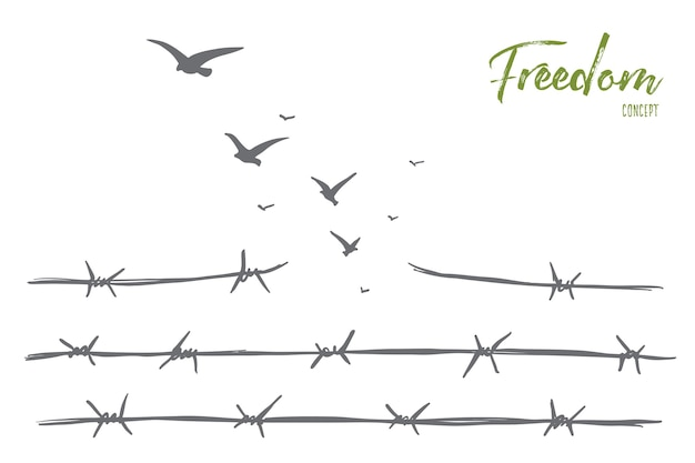 Hand drawn freedom concept sketch with broken barbed wire and flock