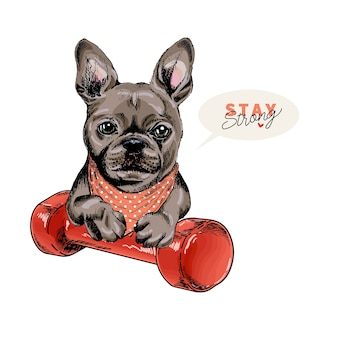 Hand drawn french bulldog dog sits with a dumpbell. stay home.