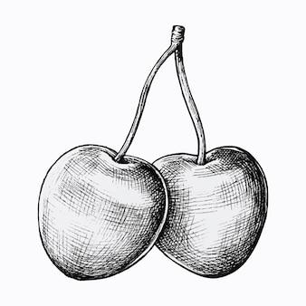 Ручной обращается свежие вишни