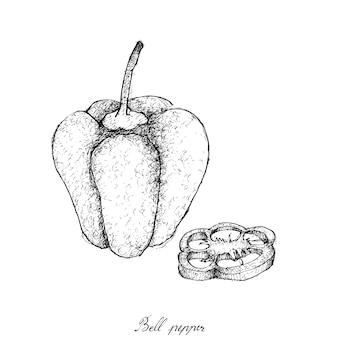 Hand drawn of fresh colored bell peppers
