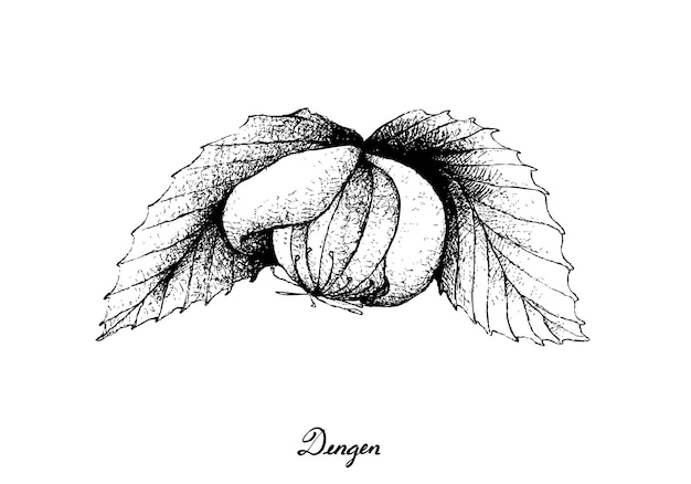 Hand drawn of a fresh dengen fruits