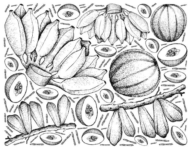Hand drawn of fresh fruits on white background