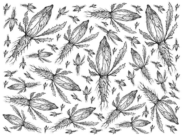 Hand drawn of fresh green chicory background