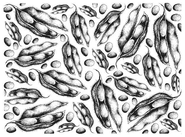 Hand drawn of fresh green soybeans background
