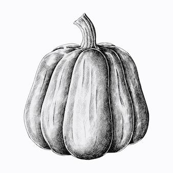 Hand drawn fresh pumpkin vector