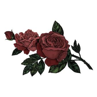 手描きの新鮮な赤いバラ