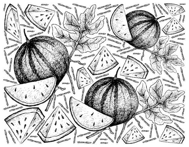 Hand drawn of fresh sugar baby watermelon background Premium Vector
