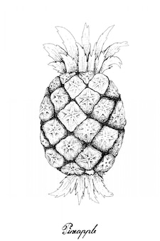 Hand drawn of fresh sweet organic pineapple