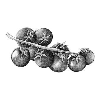 Рисованные свежие помидоры