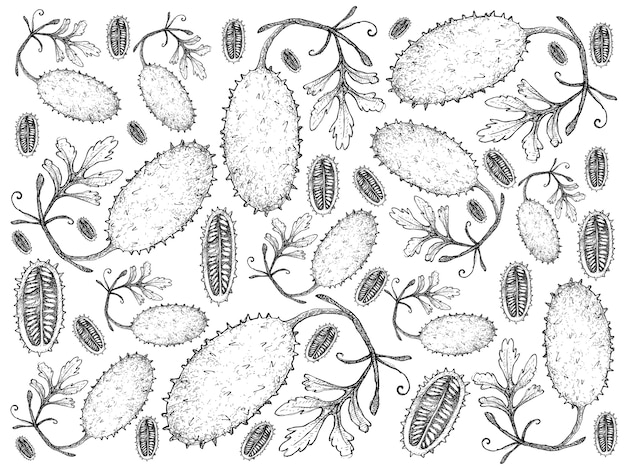 Hand drawn of fresh west indian gherkin fruits background