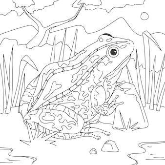 Hand drawn frog for coloring