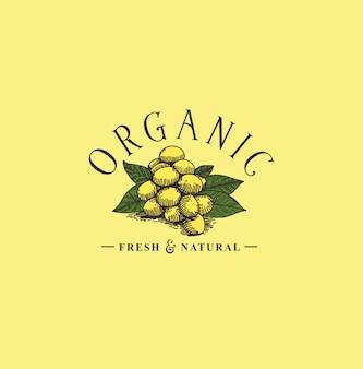 Hand drawn fruit logo