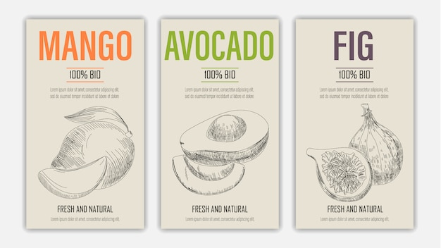 Hand drawn fruits of mango, avacado and fig posters. vintage style healthy food concept.