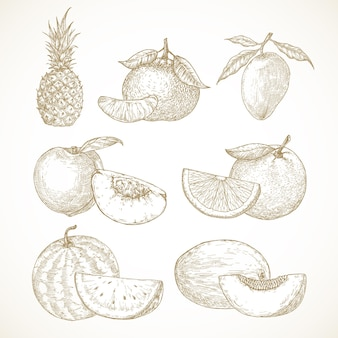 손으로 그린 과일 벡터 일러스트 컬렉션 파인애플 망고 귤 복숭아와 수박 ...
