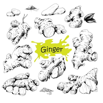 Hand drawn ginger set