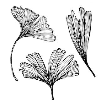 Набор рисованной листьев гинкго билоба