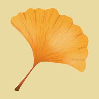 Hand drawn ginkgo element vector autumn leaf