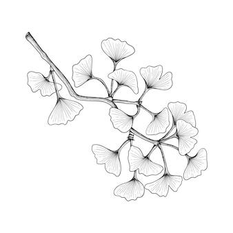 白で隔離の手描きイチョウの葉の描画イラスト