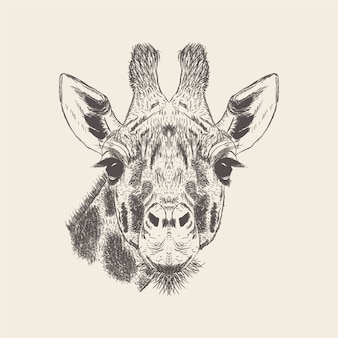 Hand drawn giraffe illustration vector