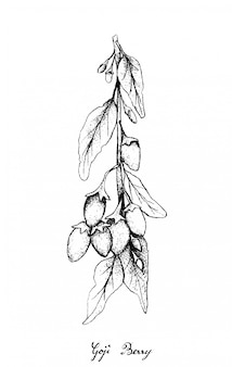 Hand drawn of goji berries on white background