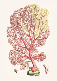 Hand drawn gorgonian fan coral