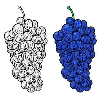 彫刻スタイルの手描きのブドウのイラスト。メニュー、ポスター、エンブレム、サイン、、チラシのデザイン要素。