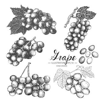 手描きのブドウのコレクション