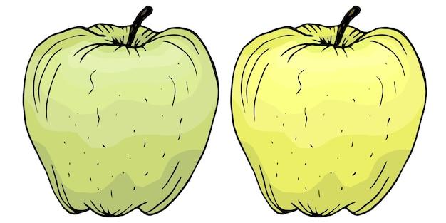 手描きの緑と黄色のリンゴのイラスト。