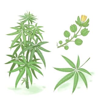 手描きの緑の大麻。大麻水彩スタイルのセット