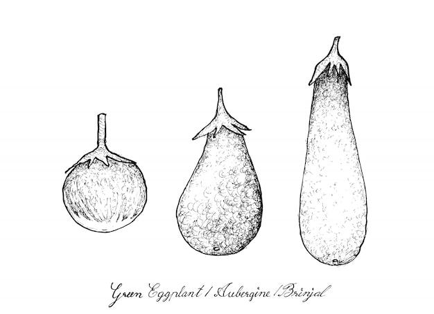 Hand drawn of green eggplant