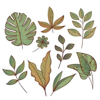 Collezione di foglie esotiche verdi disegnate a mano