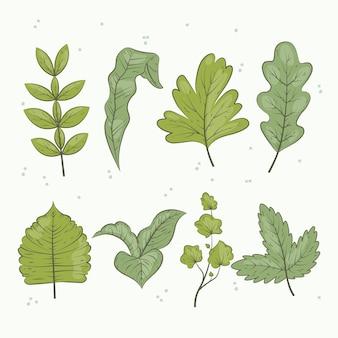 Collezione di foglie verdi disegnate a mano