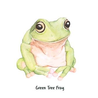 Hand drawn green tree frog