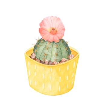 Hand drawn gymnocalycium erinaceum chin cactus in a yellow pot