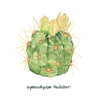 Hand drawn gymnocalycium neuhuberi cactus