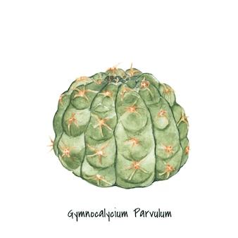 Hand drawn gymnocalycium parvulum cactus