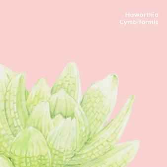 Hand drawn haworthia cymbiformis succulent